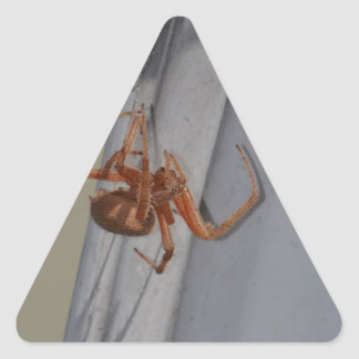 Young Spider spins a web Triangle Sticker