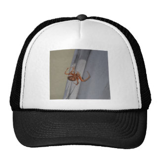 Young Spider spins a web Trucker Hat