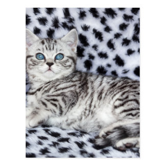 Young spotted cat  lying on black and white fur postcard