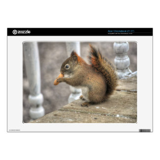 Young Squirrel eating a Peanut Decal For Acer Chromebook