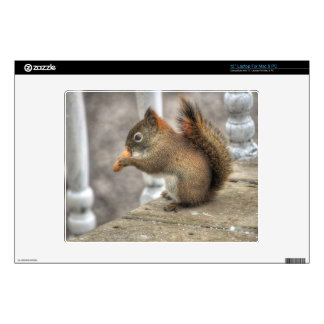 Young Squirrel eating a Peanut Decals For Laptops