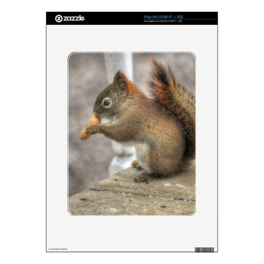 Young Squirrel eating a Peanut Skins For iPad