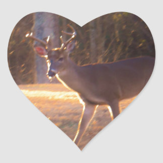 Young Stag Deer in the Sun Light Heart Sticker