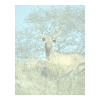 Young stag letterhead
