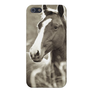 Young Stallion iPhone 5 Cover