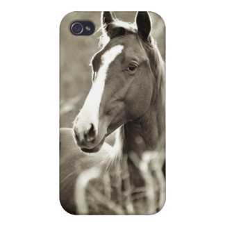 Young Stallion iPhone 4 Covers