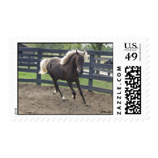 Young Stallion Postage Stamps