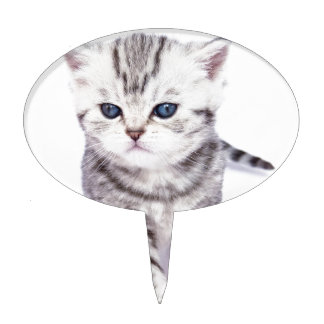 Young standing silver tabby cat with colorful ball cake topper