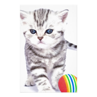 Young standing silver tabby cat with colorful ball stationery
