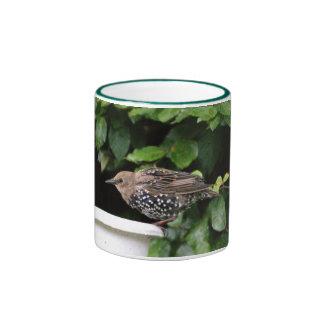 Young Starling Mug