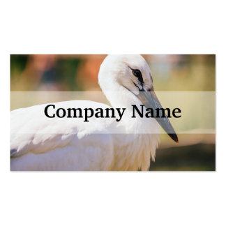 Young Stork Bird, Animal Portrait Photograph Business Card Template