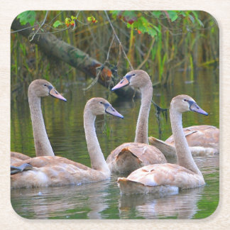 Young Swan Party Coaster