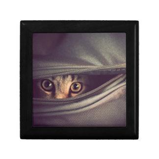 Young Tabby Kitten Jewelry Box