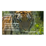 Young Tiger Cub Business Cards