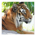 Young Tiger Personalized Invitation
