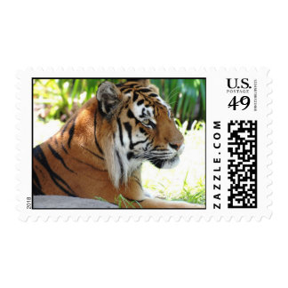 Young Tiger Postage Stamp
