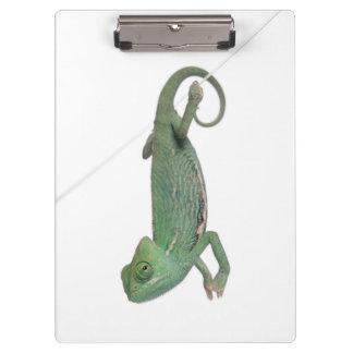 Young veiled chameleon, Chamaeleo calyptratus Clipboards