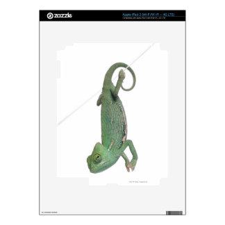 Young veiled chameleon, Chamaeleo calyptratus Decals For iPad 3