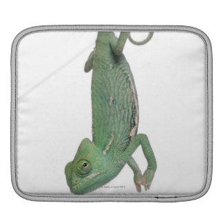 Young veiled chameleon, Chamaeleo calyptratus iPad Sleeve