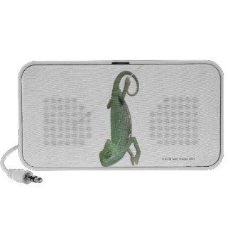 Young veiled chameleon, Chamaeleo calyptratus Speakers