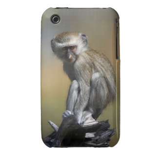 Young Vervet Monkey (Cercopithecus aethiops) in iPhone 3 Case