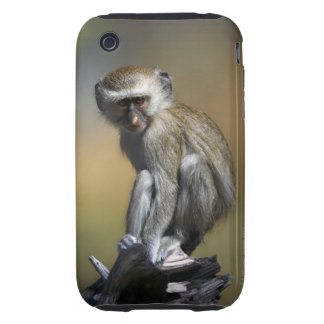 Young Vervet Monkey (Cercopithecus aethiops) in iPhone 3 Tough Cover