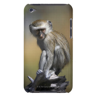Young Vervet Monkey (Cercopithecus aethiops) in iPod Case-Mate Case