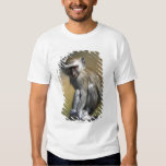Young Vervet Monkey (Cercopithecus aethiops) in T-shirt