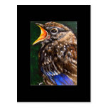 Young Voice (baby Robin) ACEO Art Trading Card Post Card
