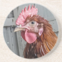 Young Welsummer Rooster Chicken Drink Coaster