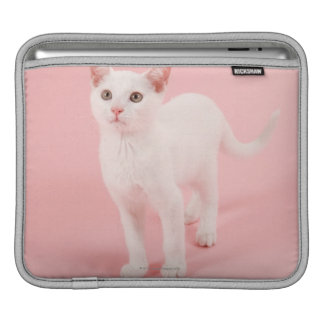 Young white cat 2 sleeves for iPads