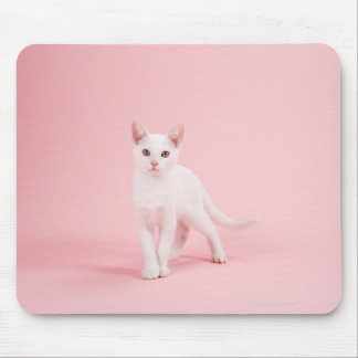 Young white cat mouse pad