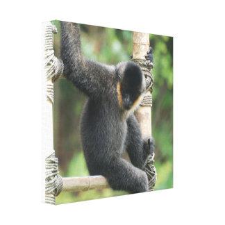 Young White Cheeked Capuchin Monkey Canvas Print