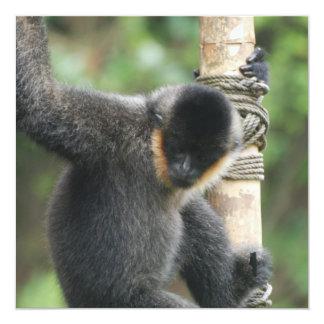 Young White Cheeked Capuchin Monkey Invitations