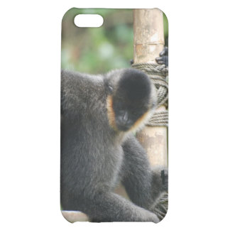 Young White Cheeked Capuchin Monkey iPhone 4 Case