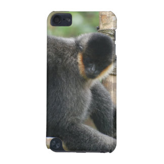 Young White Cheeked Capuchin Monkey iTouch Case iPod Touch (5th Generation) Covers
