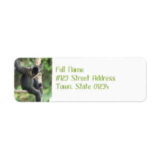 Young White Cheeked Capuchin Monkey Mailing Labels
