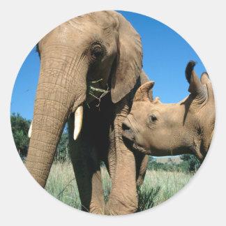 Young White Rhinoceros Classic Round Sticker