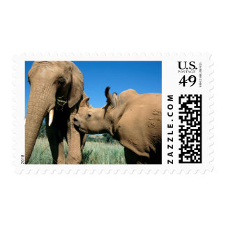 Young White Rhinoceros Postage