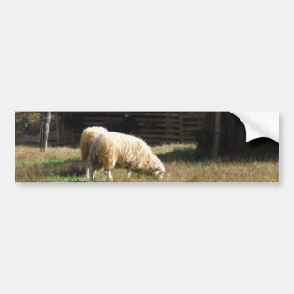 Young White Sheep on the Farm Bumper Sticker