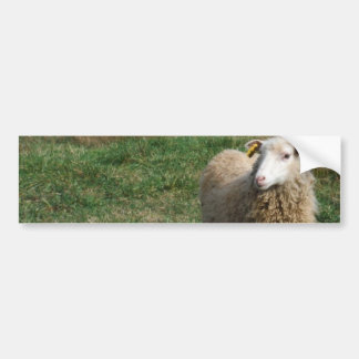 Young White Sheep on the Farm Car Bumper Sticker