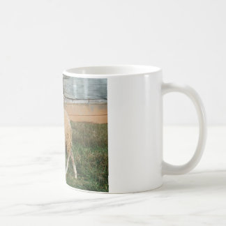 Young White Sheep on the Farm Coffee Mug