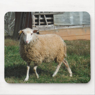 Young White Sheep on the Farm Mouse Pad
