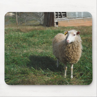 Young White Sheep on the Farm Mousepad