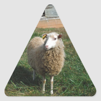 Young White Sheep on the Farm Triangle Sticker