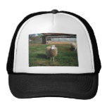 Young White Sheep on the Farm Trucker Hats