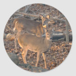 Young Whitetail Deer Series Classic Round Sticker
