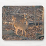 Young Whitetail Deer Series Mouse Pad