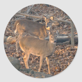 Young Whitetail Deer Series Stickers