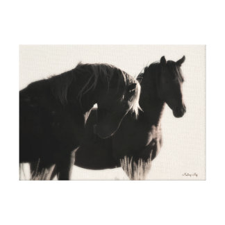 Young Wild Stallions Canvas Print